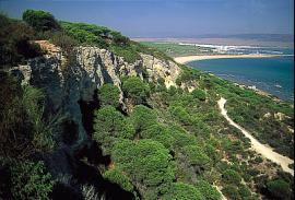 Senderismo (Cádiz): Pinar de Barbate