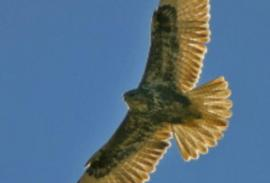Birding (Cádiz): An introduction to big-bird country