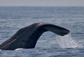 Whale-watching: with an expert guide on The Strait