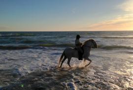 Horseriding (Cádiz): Along the edge of the surf or through spring flowers