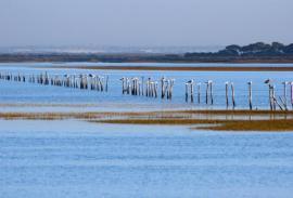 Cantidad de aves en la costa salvaje