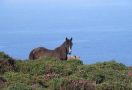 A Caballo en La Coruña