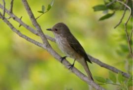 Avistamiento de aves (Cádiz): una introducción a aves grandes